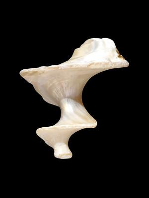 Sine shell
